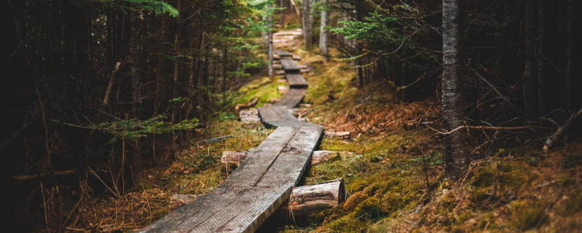 Imagen ornamental. Un camino de madera en el bosque, por Erik Mclean, CC0