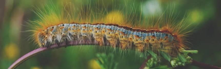 Imagen ornamental de una oruga (bug) por Yoal Desurmont en Unsplash, CC0
