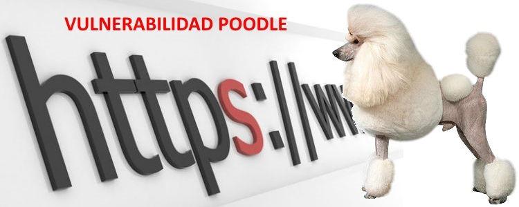 """Cómo solucionar la vulnerabilidad de SSL 3.0 """"POODLE"""" en Internet Information Server (IIS)"""